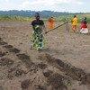 تقوم نساء في بوروندي بإعداد الأرض بالمعاول استعدادا للزراعة.
