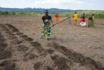 Women in Burundi tile the soil with hoes in preparation for planting.