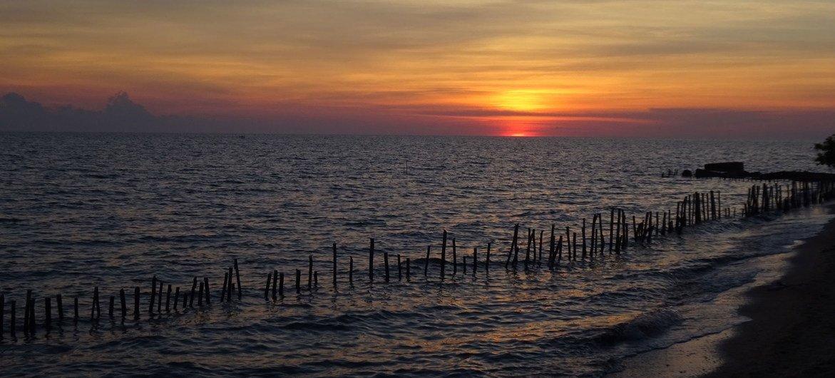 La plupart des forêts de mangroves du littoral cubain se sont détériorées au cours des dernières décennies.
