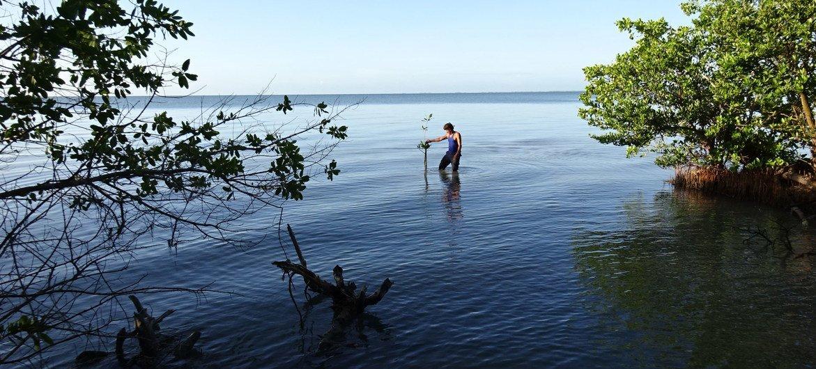 Los manglares ayudan a proteger a las comunidades costeras de la erosión y el clima extremo.