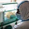 科特迪瓦宣布出现25年多来首例埃博拉病毒。
