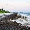 Саргассовы водоросли, портящие мексиканские пляжи, отпугивают туристов, а это сказывается на экономике страны.