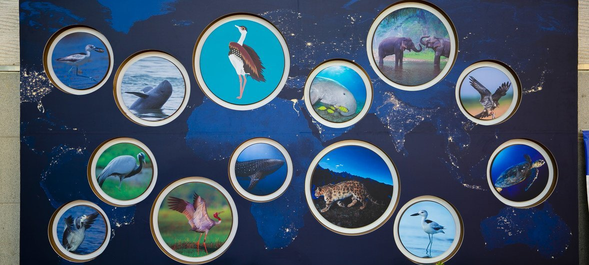A 13º reunião da Conferência das Partes da Convenção sobre Conservação de Espécies Migratórias de Animais Silvestres, CMS COP13, acontece em Gandhinagar.