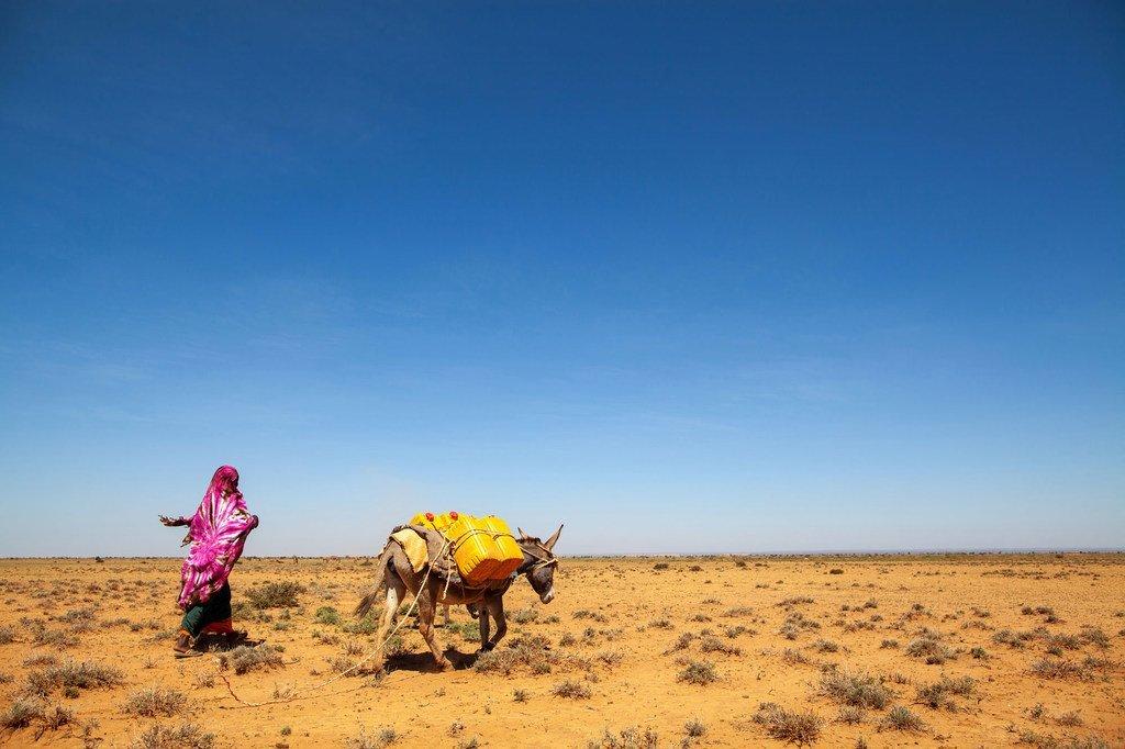 Le nord-ouest de la Somalie a souffert de sécheresses récurrentes au cours des décennies.
