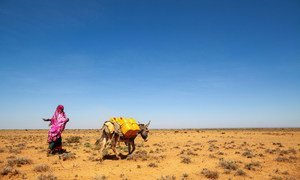 Northwest Somalia has suffered from recurrent droughts over decades.