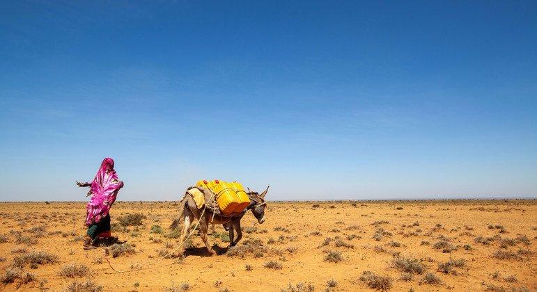 El noroeste de Somalia sufre sequías recurrentes. Las mujeres, encargadas de acarrear el agua, tienen que recorrer cada vez más territorios para conseguirla, exponiéndose a mayores peligros y arriesgando su seguridad.