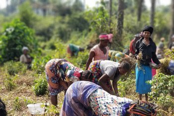 Women farmers in Sierra Leone are being encouraged to take on leadership roles in  peacebuilding.