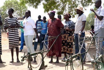 Ox ploughs have been delivered to women's groups in Rumbek North to enable the cultivation of larger areas.