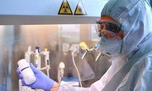 Un biólogo molecular trabaja para extraer el genoma del coronavirus.