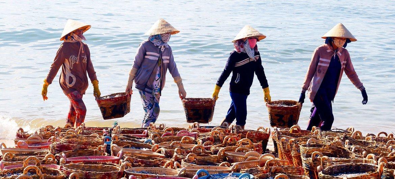 越南的女性正在晒制鱼干。