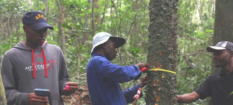 Na República Democrática do Congo, a FAO com o apoio da Iniciativa Florestal da África Central, CAFI, realizou o primeiro inventário florestal em todo o território