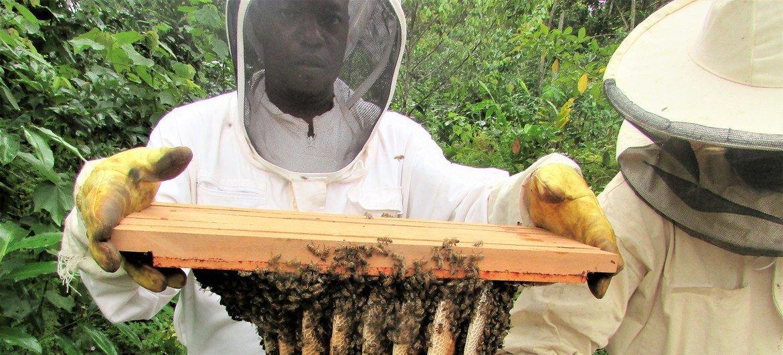 O projeto que apoia a apicultura no Gabão permitiu melhorar os meios de subsistência das comunidades locais e contruibuir para a gestão sustentável dos ecossistemas florestais