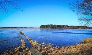 En Bielorrusia, las turberas se están revitalizando y actúan como sumideros de carbono efectivos.