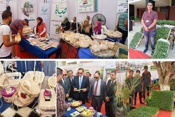 منظمة اليونيدو تطبق سياسة الزراعة المستدامة  في صعيد مصر