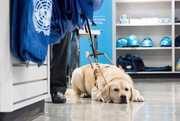 Собаки - незаменимые помощники пограничников и таможенников  в поисках  нелегальных наркотиков
