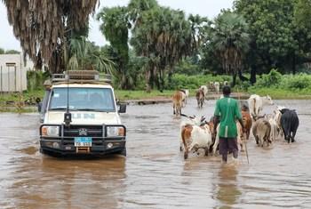 Mvua kubwa nchini Sudan Kusini zimesababisha mafuriko kwenye kambi za wakimbizi kwenye kaunti ya Maban nchini humo
