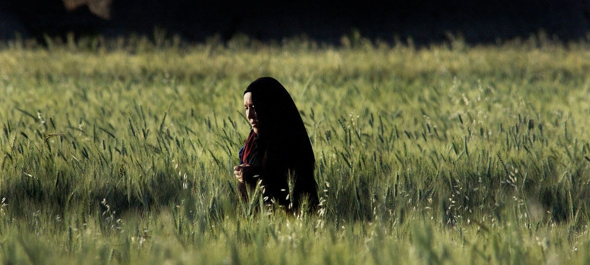 A woman walks through a field in Bamyan Province, Afghanistan, which has been declared mine-free.