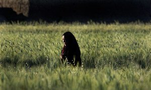 In Afghanistan, despite favourable growing conditions for crops, many people are not getting enough to eat.