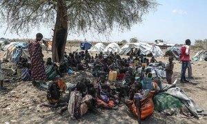 南苏丹东部的皮波尔(Pibor)社区受到了族群间暴力的影响。
