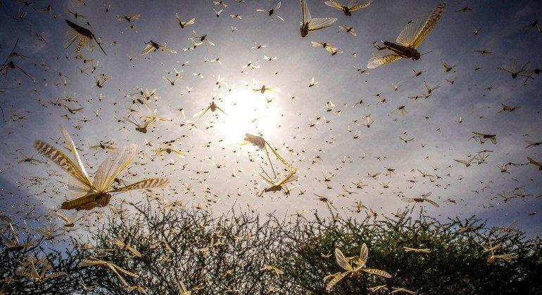 East African countries better prepared, but desert locust threat 'not over'