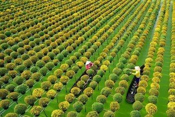 越南沙沥市著名的水上花村。