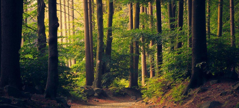 ONU lembra que o manejo sustentável das florestas e o uso de seus recursos são essenciais para combater a mudança climática
