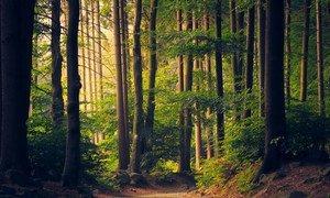 一条森林小路。