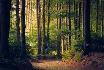 Un chemin dans la forêt.