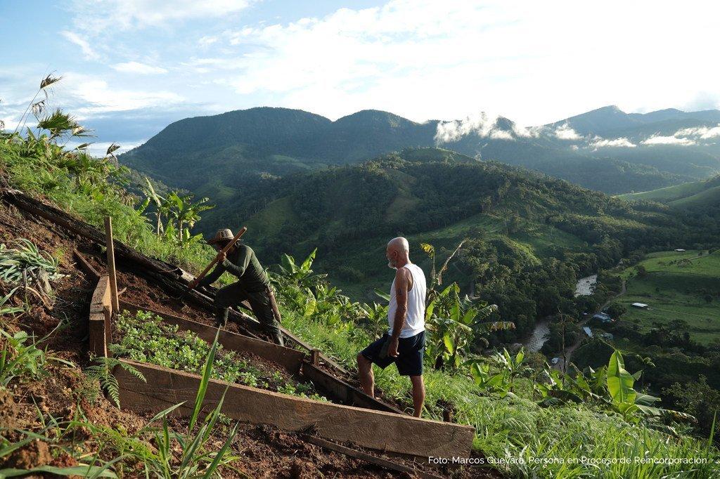 在哥伦比亚签署历史性的2016年《和平协议》之后,一些前战斗人员现已转向务农。
