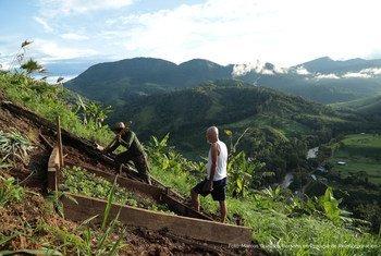 Antigos combatentes trabalham a terra na Colômbia, parte de seu processo de reintegração