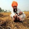 A farmer prepares to burn crop remnants in a field in Punjab, India.