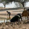الجفاف المتواصل في جنوب أنغولا يترك عشرات الأسر في يأس ولا يملك الأطفال الوقت للتعليم