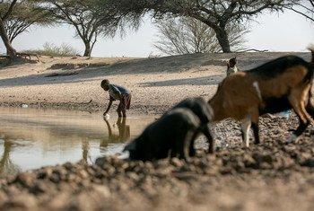 Em Angola, a falta de chuva durante os primeiros três meses do ano arrasou culturas e animais.