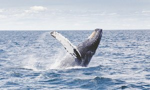 Океаны содержат почти 200 тысяч идентифицированных видов, однако реальные цифры могут составить миллионы