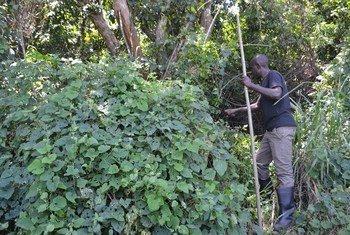 Maeneo ya msitu Bungoma nchini Uganda.