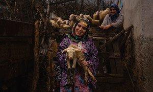 तुर्की के ग्रामीण इलाक़े में परम्परागत पोशाक पहने हुए एक महिला अपने मवेशी को गोद में लिये हुए.