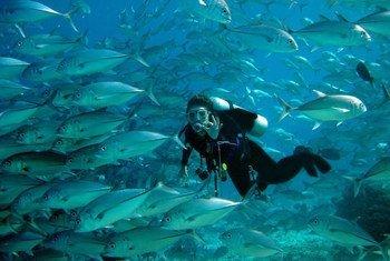 巴西人Karina Dubeux是2004年12月印度洋海啸的幸存者之一。