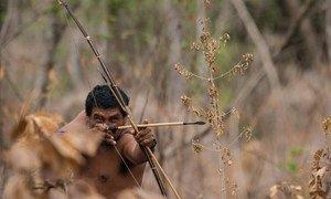 Os meios de subsistência e as atividades econômicas de muitos povos indígenas se transformaram.