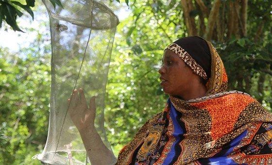 O cultivo de borboletas foi introduzido em Arabuko Sokoke em 1993 como um projeto da comunidade local para gerar renda diretamente para a comunidade a partir da floresta.