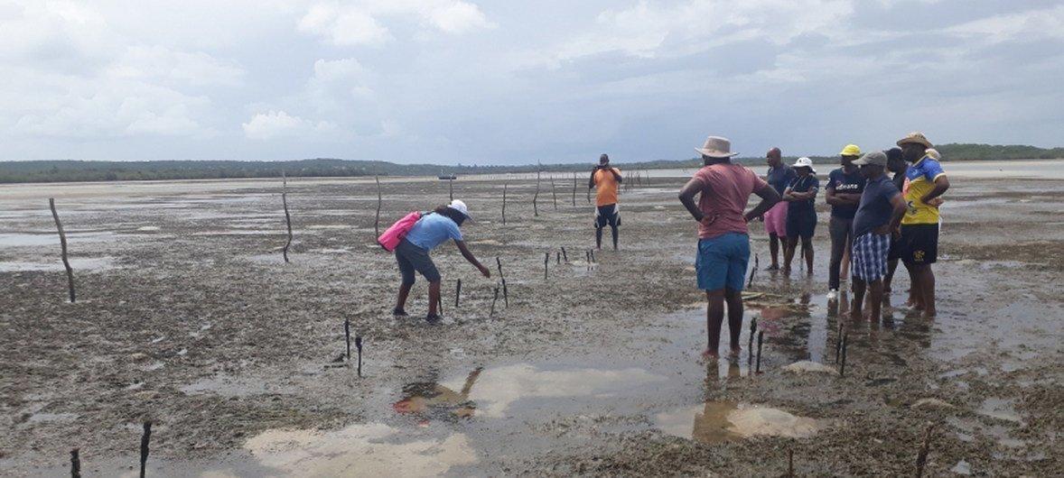 Projeto também ajudará Moçambique a atingir suas metas sob o Objetivo de Desenvolvimento Sustentável 14.2, sob o qual o país se comprometeu a proteger os ecossistemas marinhos e costeiros.