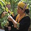 لطالما كانت المجتعمات الأصلية في ماليزيا المدافعة عن البيئة الطبيعية في جنوب شرق الدولة الآسيوية.