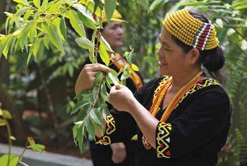 मलेशिया में आदिवासी समुदाय इस दक्षिण-पूर्वी एशियाई देश में प्राकृतिक वातावरण के काफ़ी पुराने समय से संरक्षक रहे हैं.