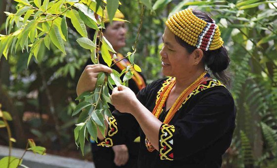 Indigenous communities in Malaysia have long been the guardians of the natural environment in the southeast Asian country.