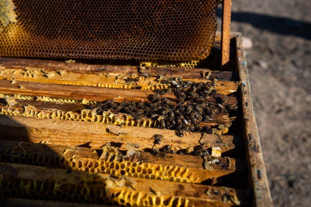 النحل يعمل في خليته