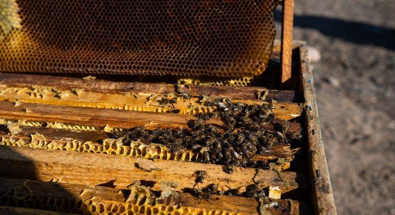 Una colmena de abejas