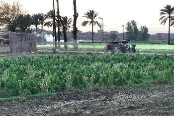 الشرقية، محافظة ريفية تقع على بعد 80 كيلومترا من العاصمة المصرية القاهرة.