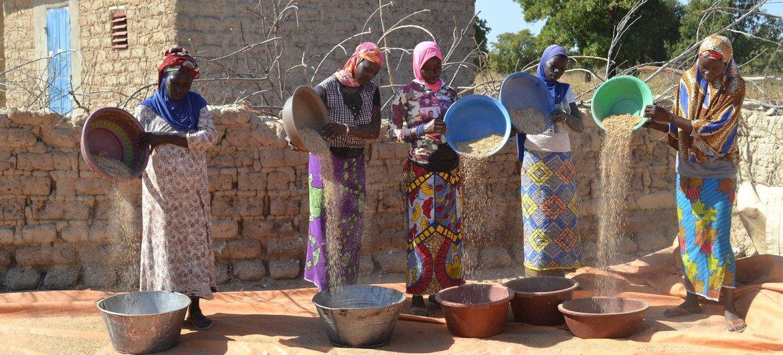 Women winnowing millet in  Sololabougouda village, Sikasso, Mali.