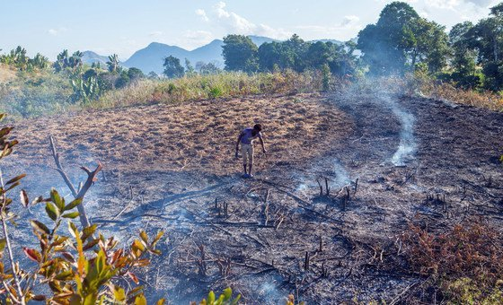 In Madagascar, galore  farmers proceed  to pain  their fields successful  bid   to hole   for the adjacent  harvest.