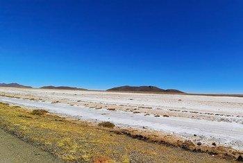 Des centaines de millions d'hectares de terres sont affectées par salinisation à travers le monde.