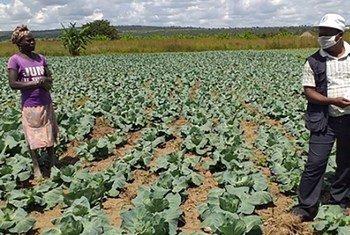 Agricultora da província angolana do Huambo recebe mensagens sobre propagação da Covid-19.